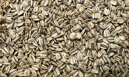 david sunflower seeds clipart - photo #37